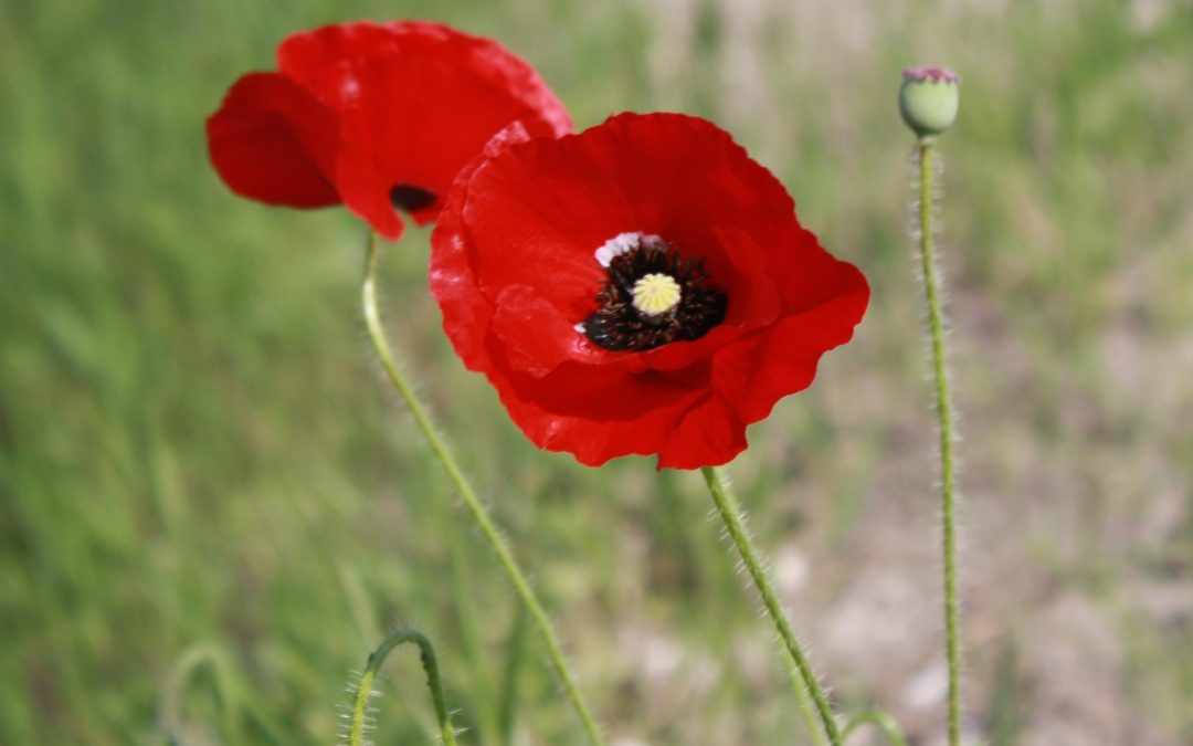 Remembrance Day 2020 – Time to Reflect